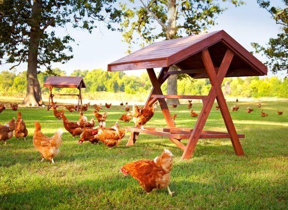 The Happy Egg Co Farm