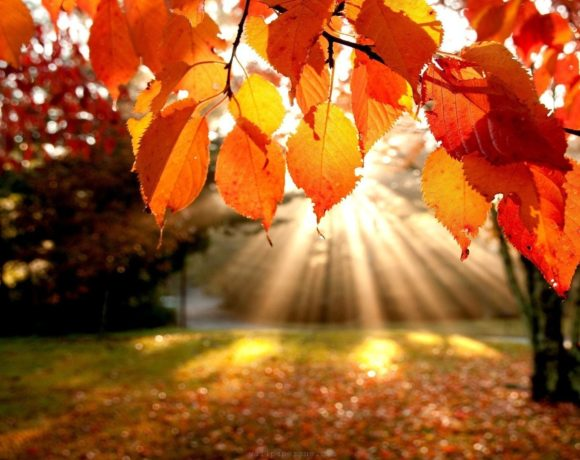 fight fall dryness