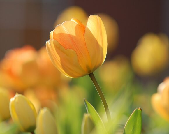 spring sleep
